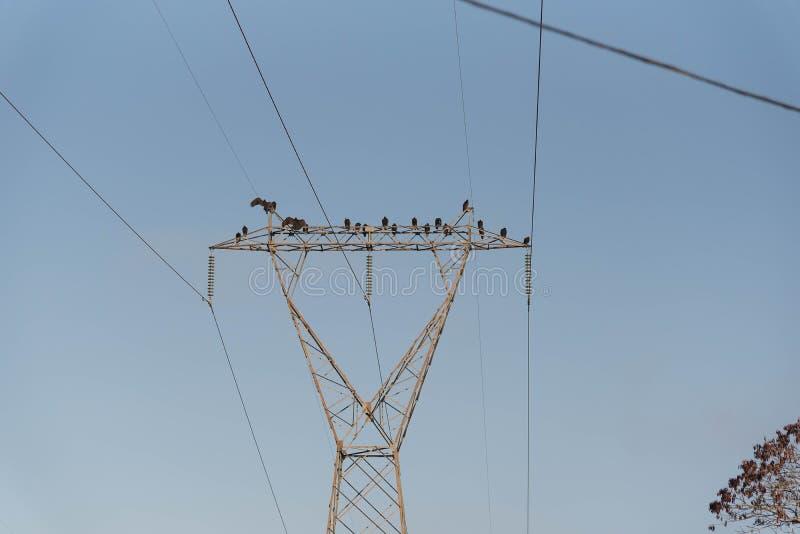 Καρακάξες και γύπες της ηλεκτρικής δύναμης 05 στοκ φωτογραφία
