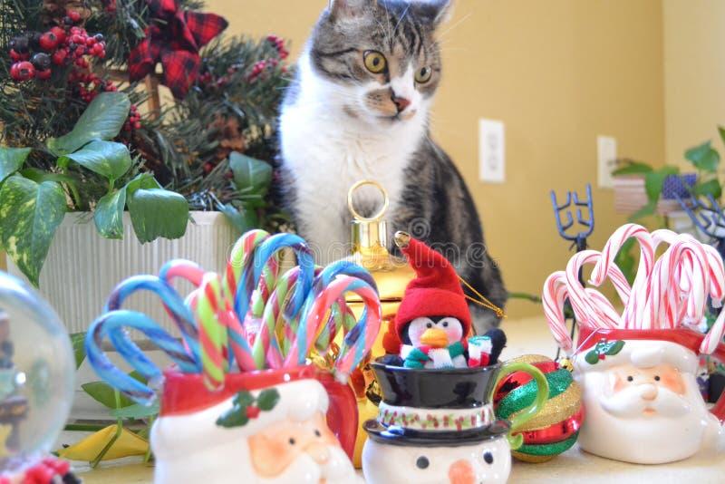 Καραμέλα και επιδείξεις Χριστουγέννων στοκ εικόνες με δικαίωμα ελεύθερης χρήσης