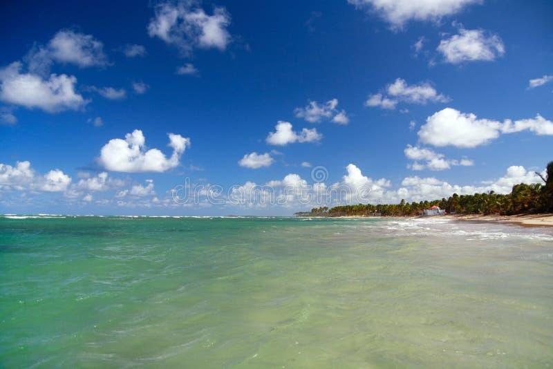Download καραϊβική δεξαμενή χώνευσ& στοκ εικόνα. εικόνα από δέντρο - 13181071
