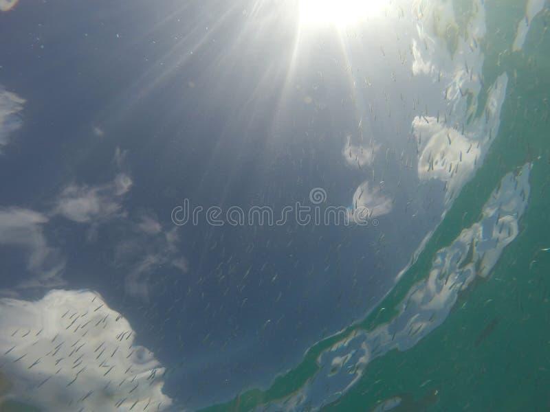 Καραϊβική θάλασσα με τα ψάρια και ηλιοφάνεια στη γωνία στοκ εικόνα με δικαίωμα ελεύθερης χρήσης
