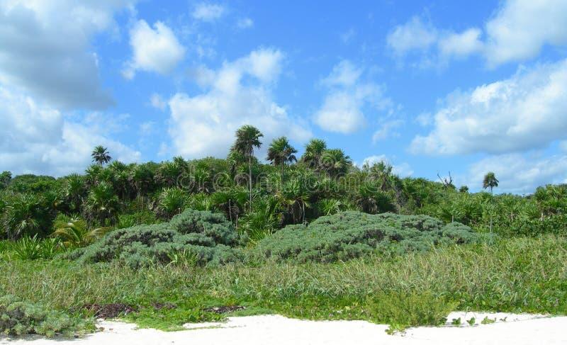 Καραϊβική παραλία στο Riviera Maya, Cancun, Μεξικό στοκ εικόνα με δικαίωμα ελεύθερης χρήσης