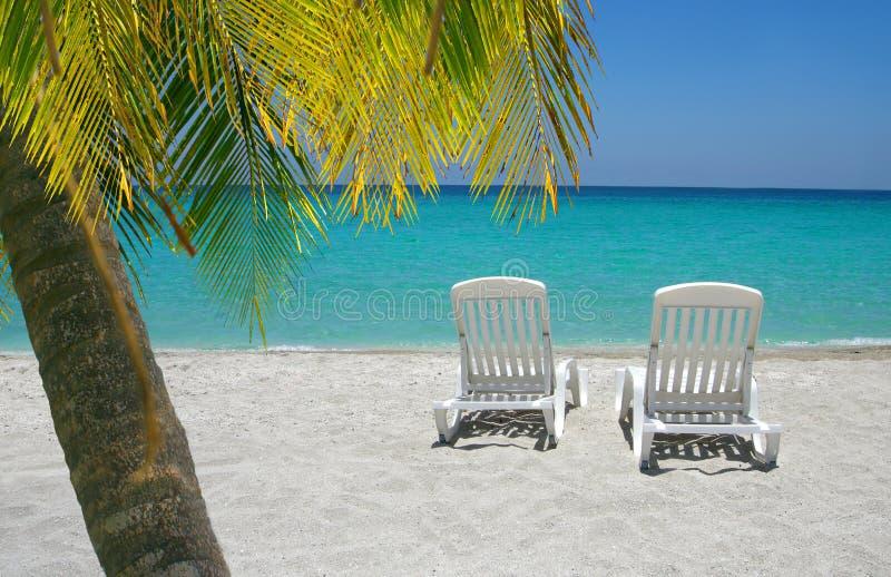 Καραϊβικοί έδρες και φοίνικας παραλιών στοκ φωτογραφία με δικαίωμα ελεύθερης χρήσης