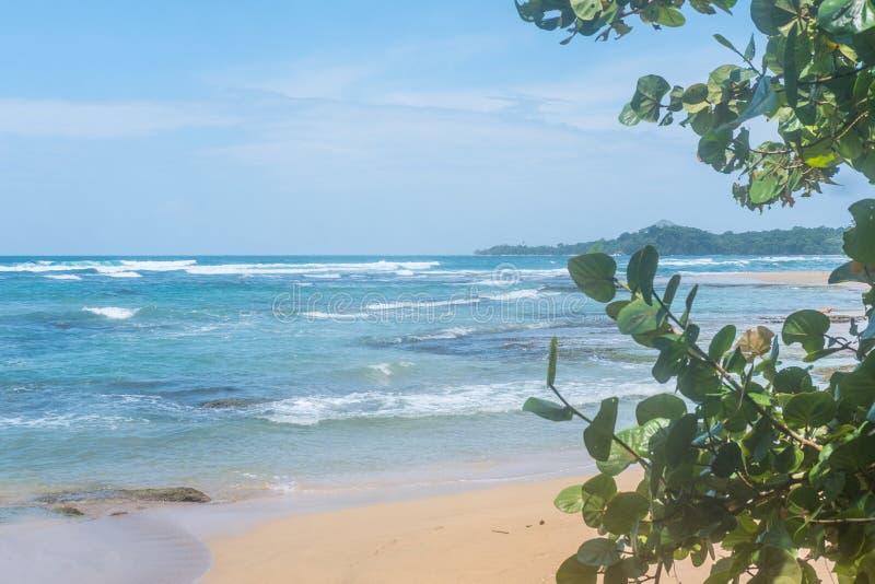 Καραϊβικό τροπικό δάσος δέντρων διακοπών παραδείσου παραλιών νερού της Κόστα Ρίκα ωκεάνιο όμορφο στοκ εικόνα