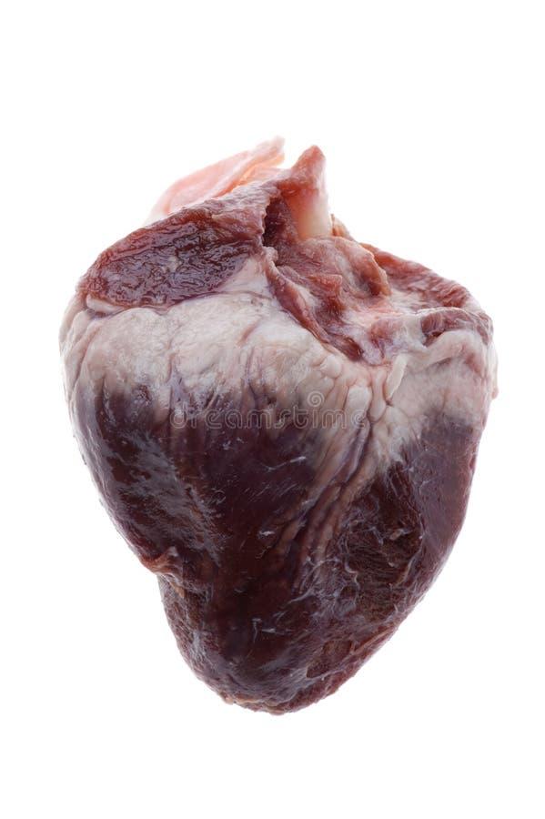 καρδιά βόειου κρέατος στοκ φωτογραφία με δικαίωμα ελεύθερης χρήσης