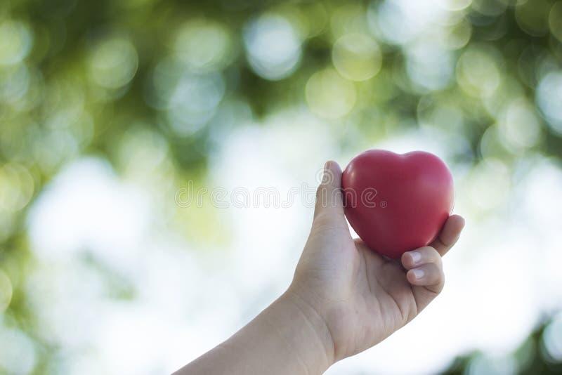καρδιά εκμετάλλευσης χεριών στην πράσινη μαλακή φύση στοκ φωτογραφία με δικαίωμα ελεύθερης χρήσης