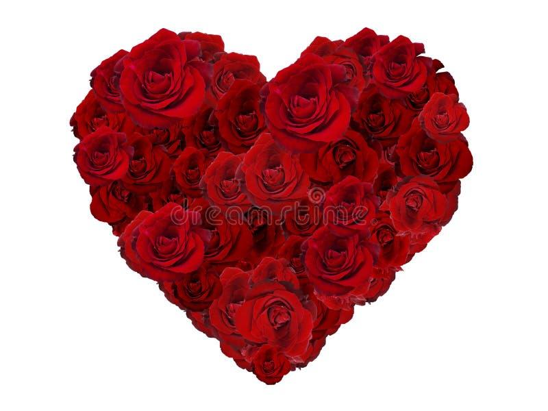 Καρδιά ημέρας βαλεντίνων φιαγμένη από κόκκινα τριαντάφυλλα που απομονώνονται στο άσπρο υπόβαθρο στοκ φωτογραφία