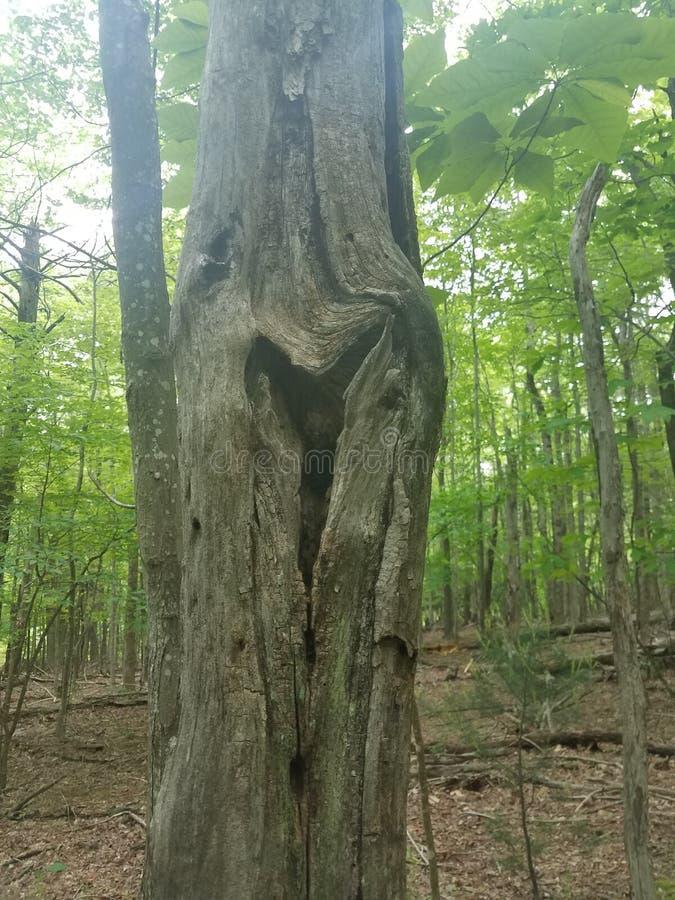 Καρδιά στο δέντρο στοκ φωτογραφία με δικαίωμα ελεύθερης χρήσης