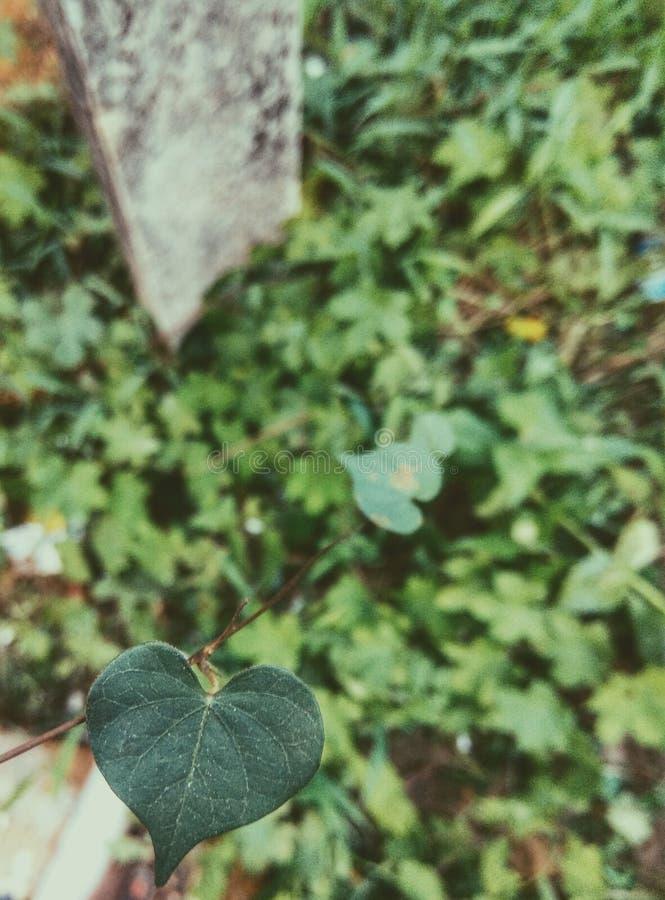 Καρδιά της μητέρας φύση Άγριος και δονούμενος στοκ φωτογραφία με δικαίωμα ελεύθερης χρήσης