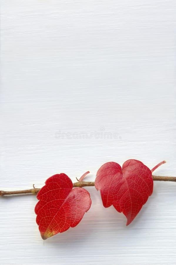 καρδιές φυσικά δύο στοκ εικόνες