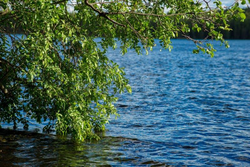 Καρελιανή λίμνη στοκ εικόνες με δικαίωμα ελεύθερης χρήσης