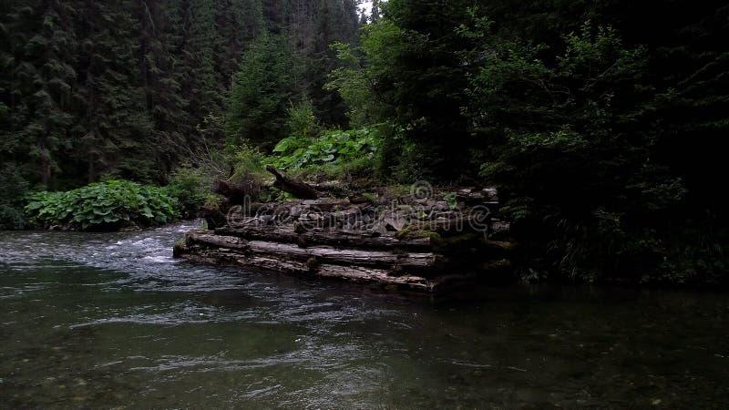 Καρπάθια βουνά στοκ φωτογραφία με δικαίωμα ελεύθερης χρήσης