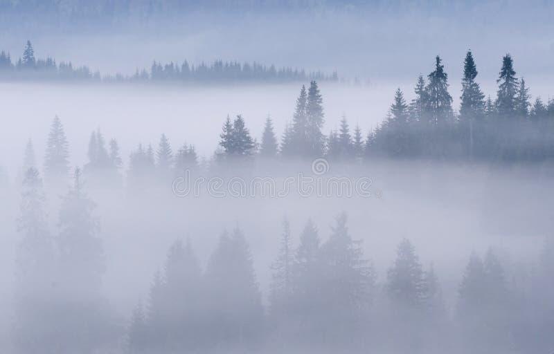 Καρπάθια δασικά misty βουνά στοκ εικόνα με δικαίωμα ελεύθερης χρήσης