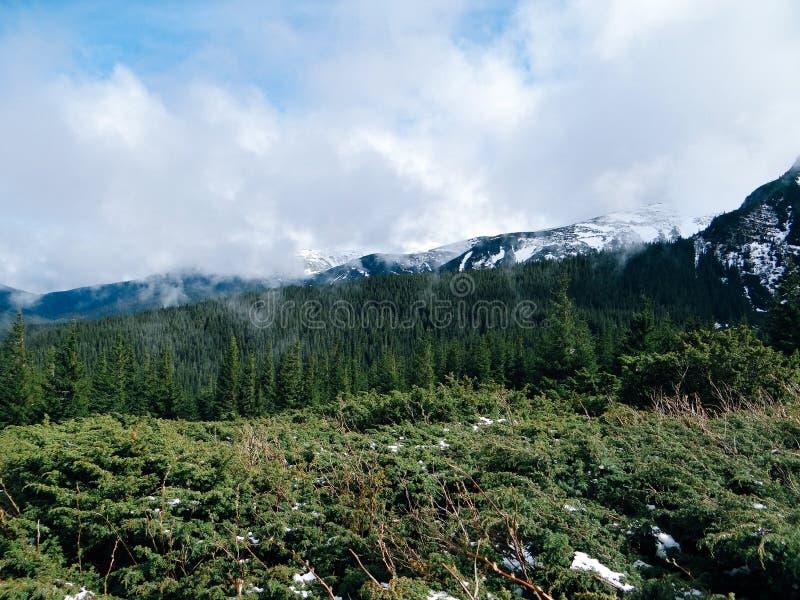 Καρπάθιο τοπίο - βουνό Goverla στοκ φωτογραφία
