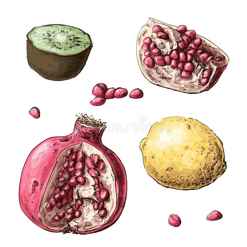 καρποί που τίθενται Λεμόνι, γρανάτης, ακτινίδιο επίσης corel σύρετε το διάνυσμα απεικόνισης διανυσματική απεικόνιση
