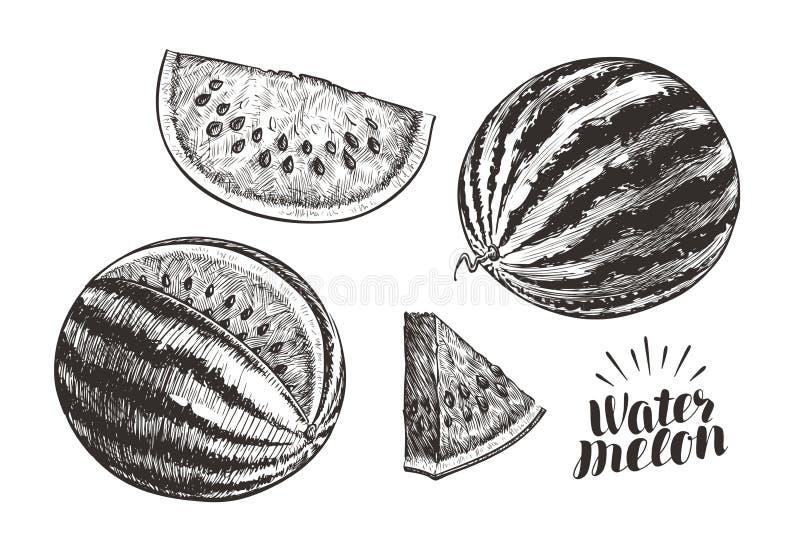 Καρπούζι και φέτες, σκίτσο Εκλεκτής ποιότητας διανυσματική απεικόνιση απεικόνιση αποθεμάτων
