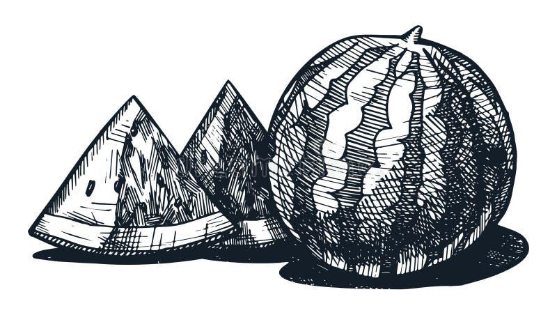 Καρπούζι απεικόνιση αποθεμάτων