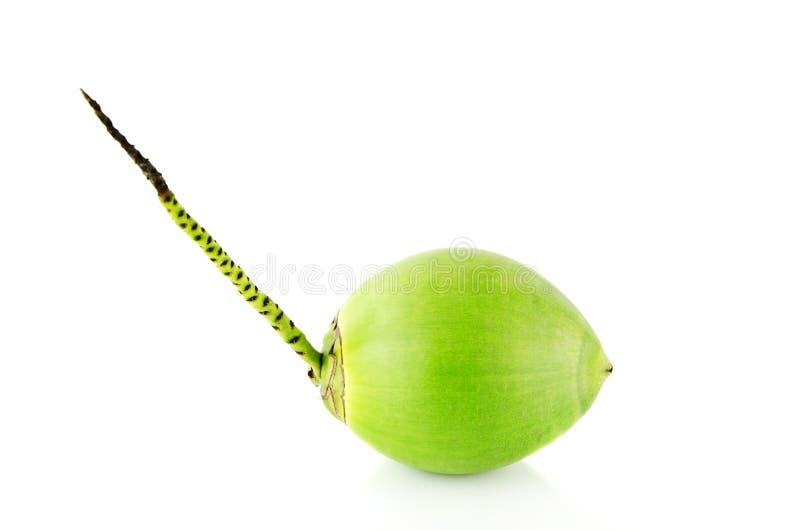 καρπός καρύδων πράσινος στοκ φωτογραφίες με δικαίωμα ελεύθερης χρήσης