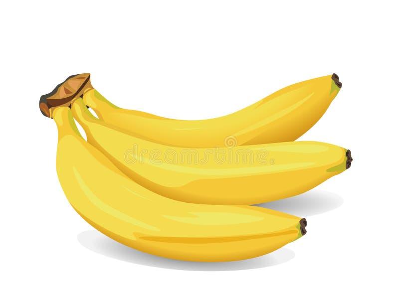 καρπός μπανανών διανυσματική απεικόνιση