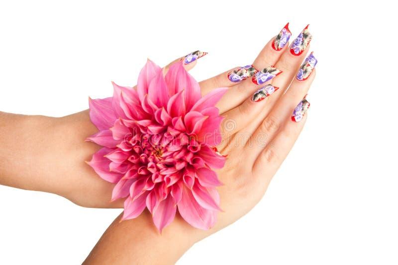 καρφιά λουλουδιών στοκ εικόνες με δικαίωμα ελεύθερης χρήσης
