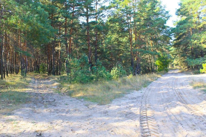 Καρφωμένοι με τη διχάλα αμμώδεις δρόμοι στο δάσος πεύκων στοκ εικόνες με δικαίωμα ελεύθερης χρήσης