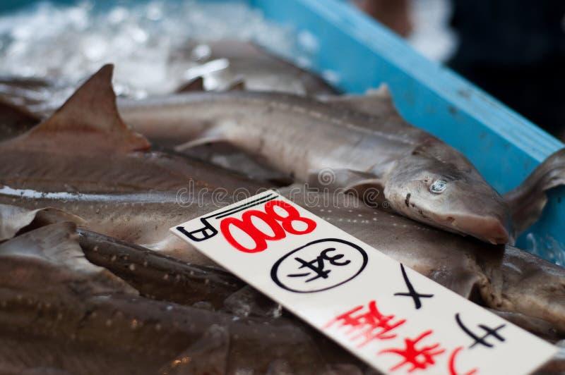 Download καρχαρίας πώλησης στοκ εικόνες. εικόνα από ιαπωνία, αγορά - 13178194
