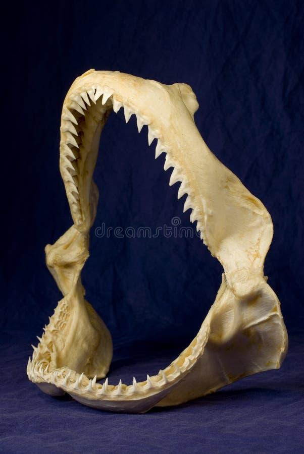 καρχαρίας 10 στοκ εικόνα