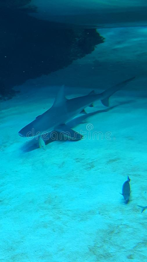 Καρχαρίας στοκ φωτογραφία