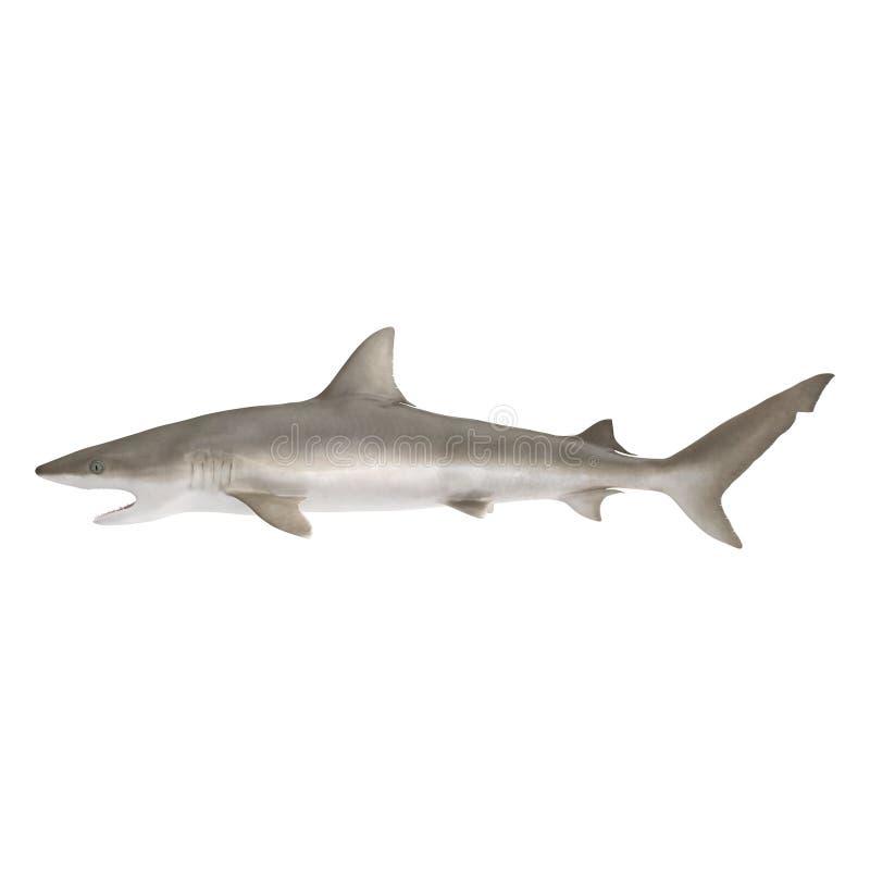 Καρχαρίας Blacknose στο λευκό τρισδιάστατη απεικόνιση στοκ φωτογραφίες