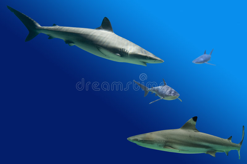 καρχαρίες στοκ φωτογραφία