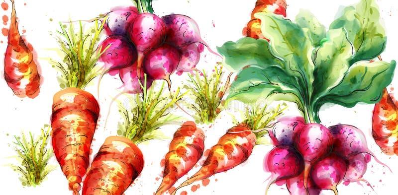 Καρότα και διανυσματικό watercolor ραδικιών Φρέσκια απεικόνιση άνοιξη veggies διανυσματική απεικόνιση