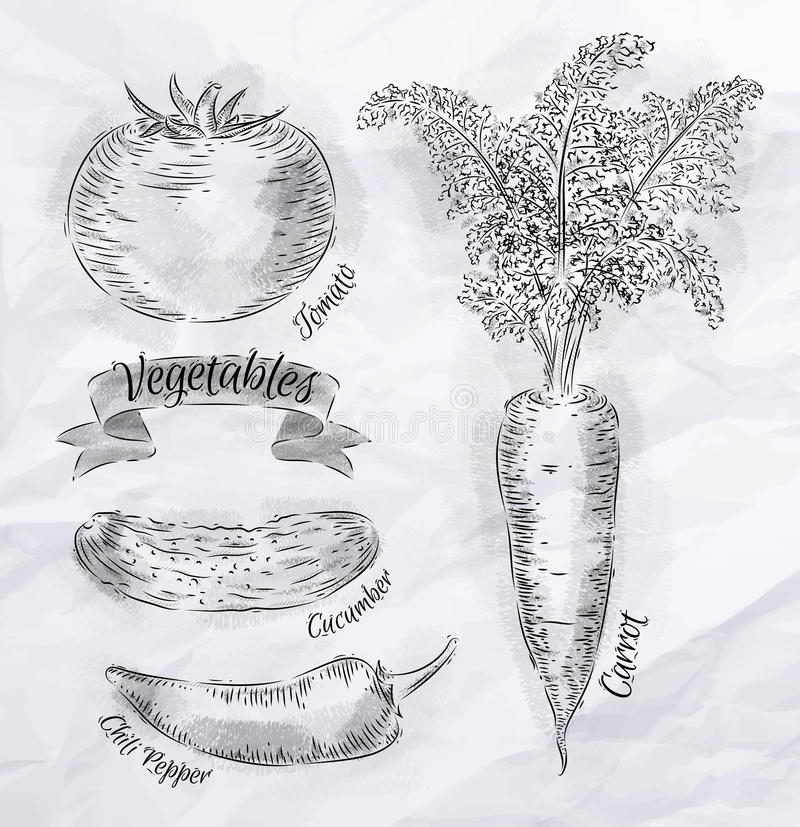 Καρότο λαχανικών, ντομάτα, πιπέρια τσίλι, αγγούρι διανυσματική απεικόνιση