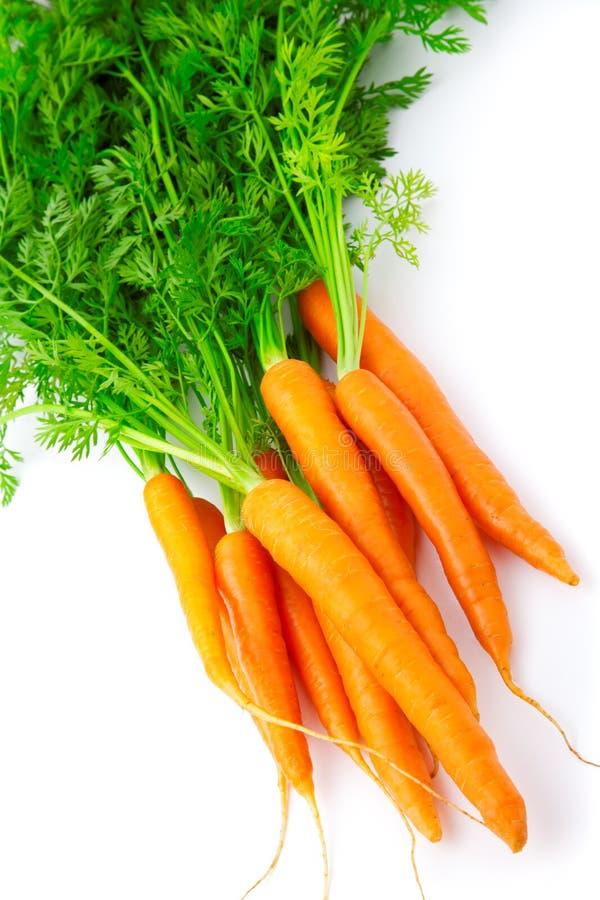 καρότο φρέσκο στοκ εικόνα