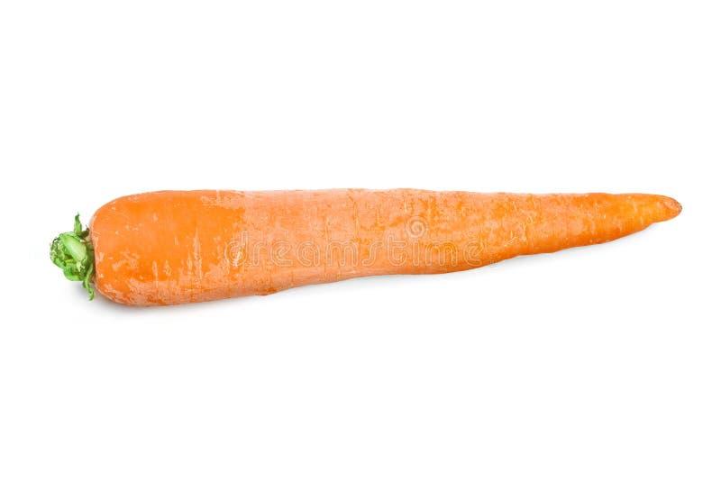 Καρότο στοκ φωτογραφία