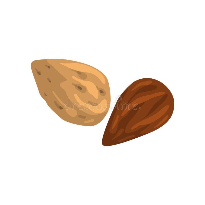 Καρύδι αμυγδάλων, θρεπτική διανυσματική απεικόνιση φυσικών προϊόντων σε ένα άσπρο υπόβαθρο διανυσματική απεικόνιση
