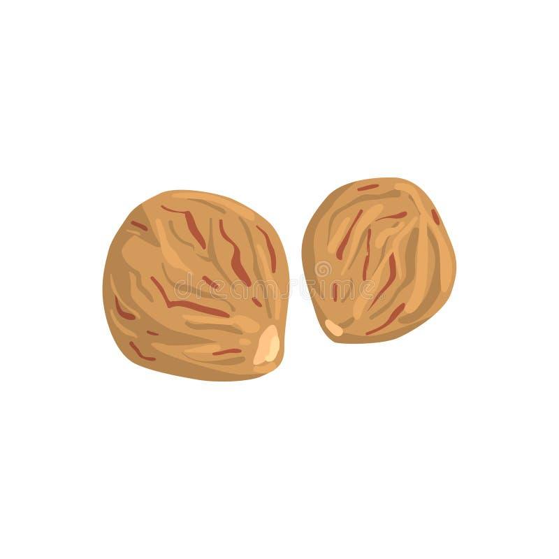 Καρύδι μοσχοκάρυδου, θρεπτική διανυσματική απεικόνιση φυσικών προϊόντων σε ένα άσπρο υπόβαθρο απεικόνιση αποθεμάτων