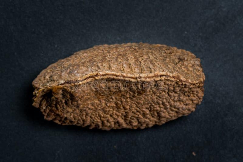 Καρύδι της Βραζιλίας Shell στο σκοτεινό υπόβαθρο στοκ φωτογραφία