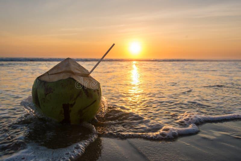 Καρύδα σε μια τροπική παραλία στο ηλιοβασίλεμα στοκ εικόνα