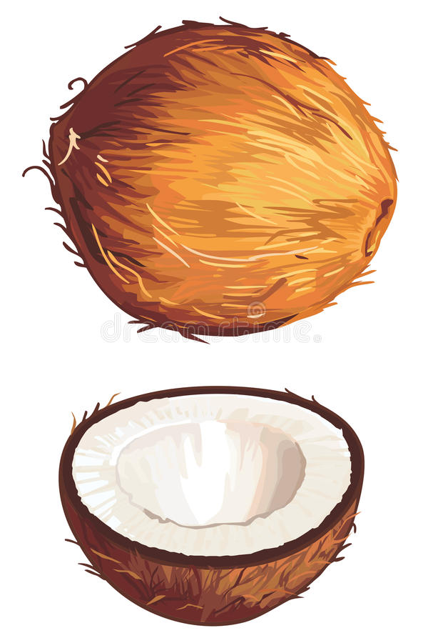 Καρύδα απεικόνιση αποθεμάτων