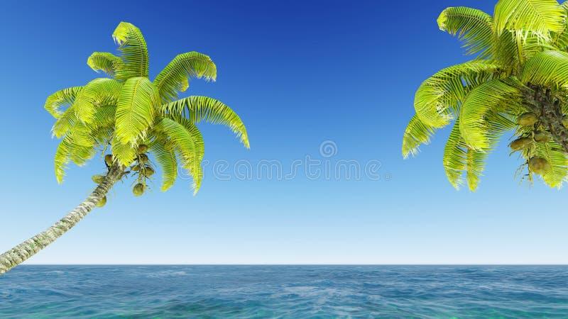 Καρύδες στην παραλία στοκ εικόνες με δικαίωμα ελεύθερης χρήσης