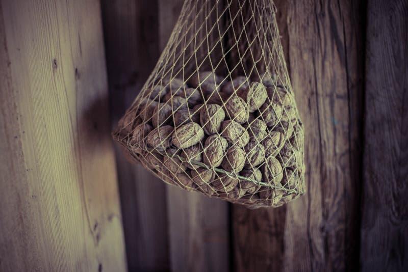 καρύδια στοκ φωτογραφία με δικαίωμα ελεύθερης χρήσης