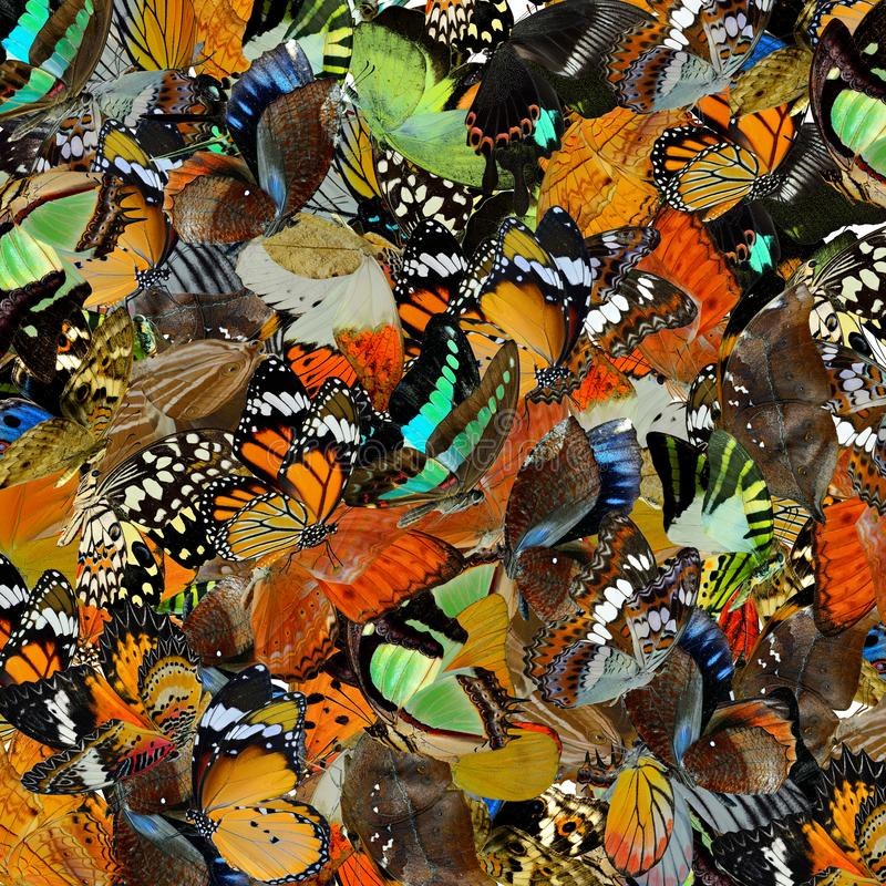 Κατάπληκτο υπόβαθρο φιαγμένο από επάνω οι ζωηρόχρωμες πεταλούδες στο dif στοκ φωτογραφία με δικαίωμα ελεύθερης χρήσης