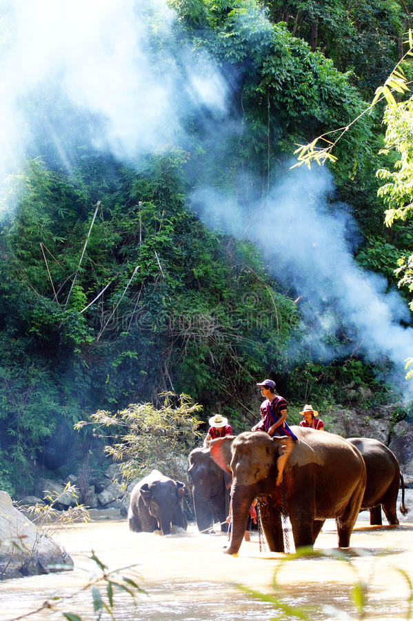 κατάρτιση ελεφάντων στρα&tau στοκ φωτογραφία με δικαίωμα ελεύθερης χρήσης