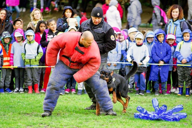 Κατάρτιση σκυλιών αστυνομίας στοκ φωτογραφία