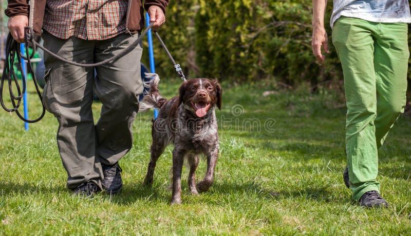 Κατάρτιση σκυλιών, σχολείο για τα σκυλιά στοκ φωτογραφία
