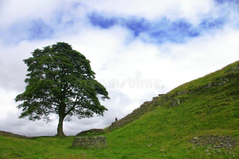 κατά μήκος του τοίχου δέντρων hadrians στοκ εικόνες
