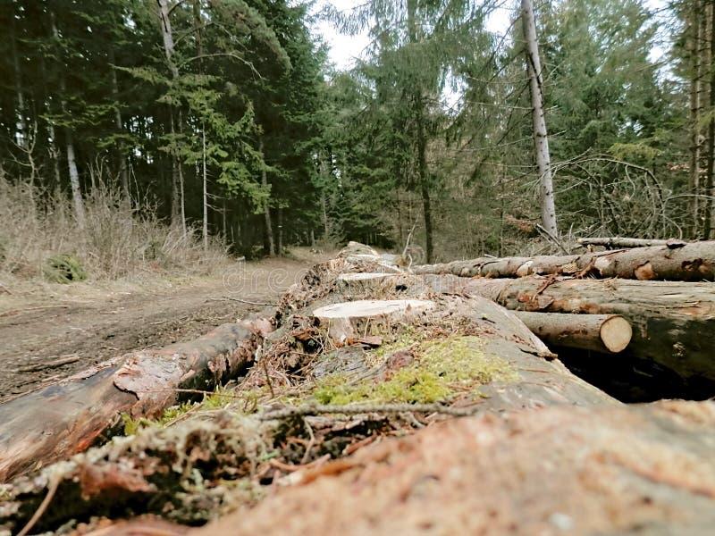 Καταγραφή και μεγάλο να βρεθεί δέντρων στοκ εικόνες