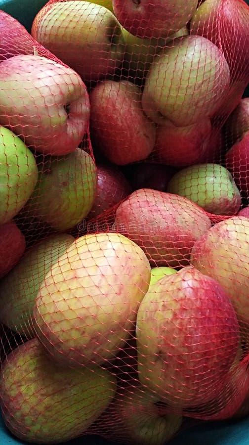 Κατακόρυφο κοντινό πλάνο μήλου malang στην Ανατολική Ιάβα της Ινδονησίας στοκ φωτογραφίες με δικαίωμα ελεύθερης χρήσης