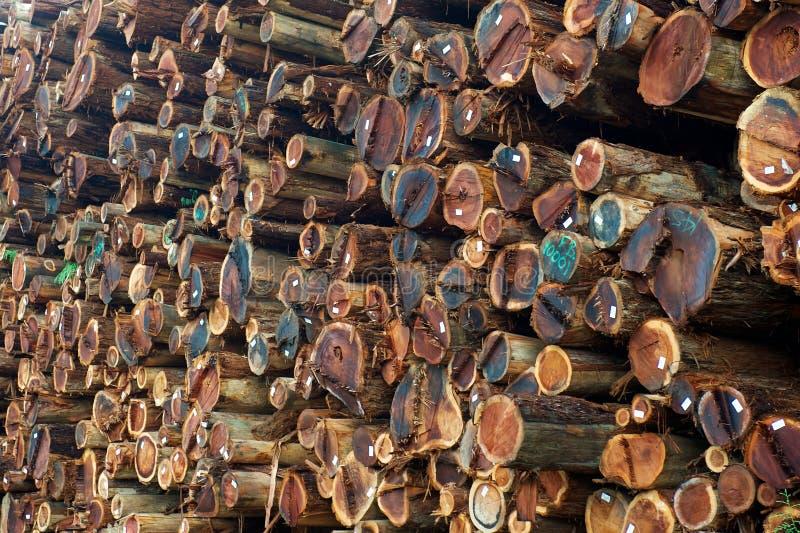 καταλάβετε redwood συσσωρε&upsil στοκ εικόνα