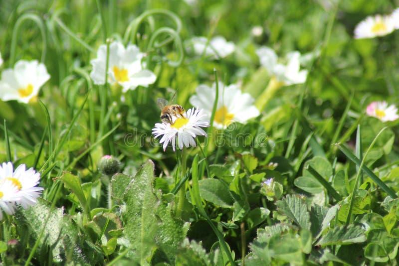 Κατανάλωση μελισσών στοκ φωτογραφία με δικαίωμα ελεύθερης χρήσης