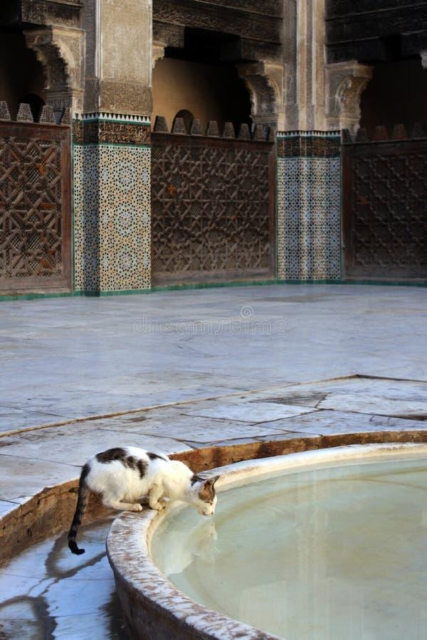 Κατανάλωση γατών από την πηγή μουσουλμανικών τεμενών στοκ εικόνες